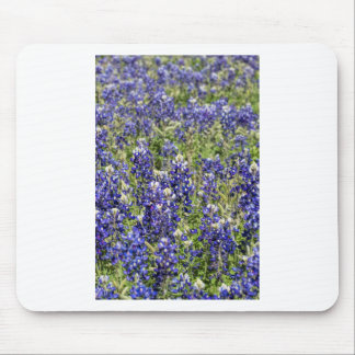 Colorful Texas Bluebonnets - Lupinus texensis Mousepad