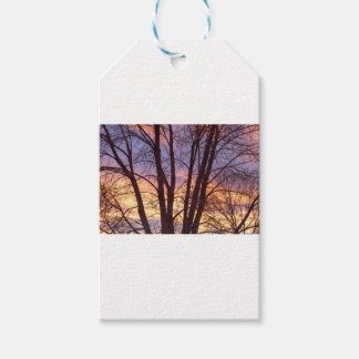 Colorful Tree Branches Night Gift Tags