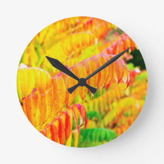 Colorful tree leaves in autumn season outdoors clock