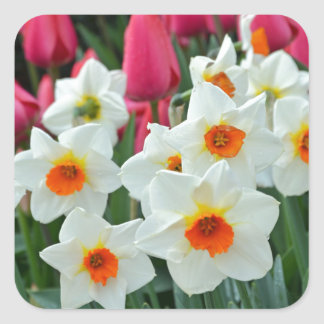 Colorful tulips and daffodils garden square sticker