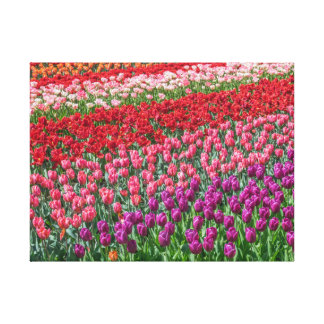 Colorful tulips canvas print