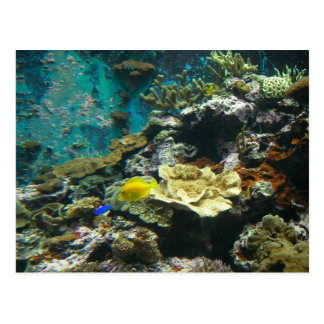 Colorful Undersea World/Coral Reef Marine Life l Postcard