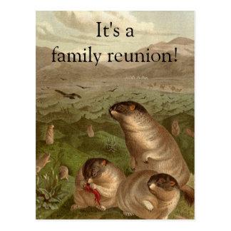 Colorful vintage marmot reunion invitation postcard