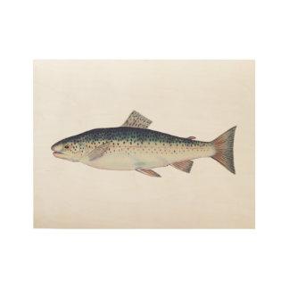 Colorful vintage salmon illustration wood poster