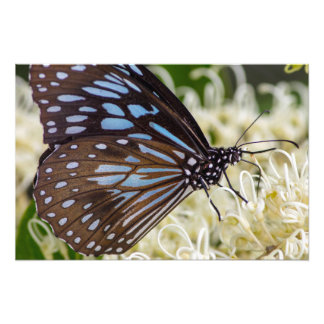 Colorful Visitor Art Photo