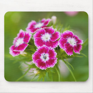 Colorful Wildflowers... Mousepads