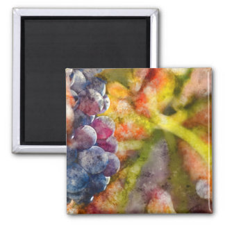 Colorful Wine Grapes on the Vine Magnet
