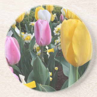 Colorful Yellow and Pink Tulips Sandstone Coaster