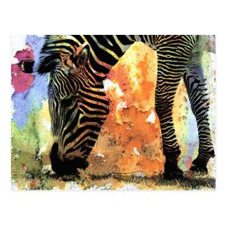 Colorful Zebra Grunge Postcard