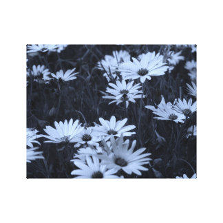colorized to a blue hue Daisies Canvas Print