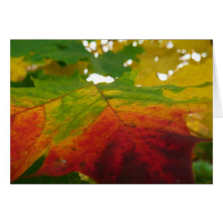 Colors of the Maple Leaf Autumn Nature Photography Greeting Card
