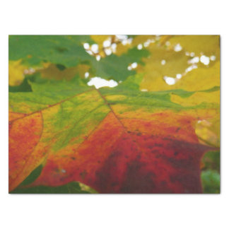 Colors of the Maple Leaf Autumn Nature Photography Tissue Paper