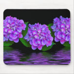 Colour Of Purple