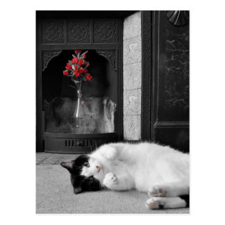 Colour Splash Cat Postcard