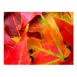 Colourful Autumn Leaves Close-up Postcard