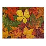 Colourful autumn leaves postcard