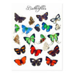 Colourful Butterfly Collection