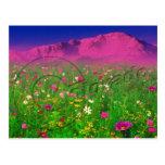 Colourful Colorado, Pikes Peak Mountain Post Card