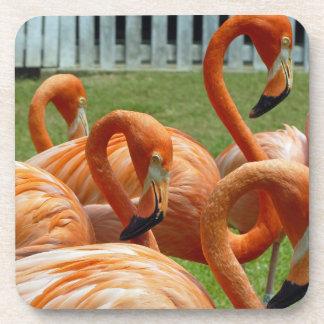 Colourful flamingos hard plastic coasters