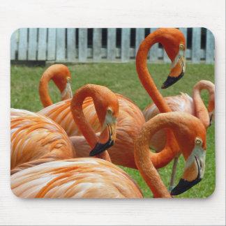 Colourful flamingos mousepad