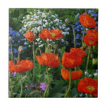 Colourful Flower Bed  with red poppies