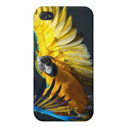 Colourful flying Ara on a dark background Cover For iPhone 4