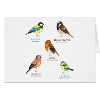 Colourful garden birds card