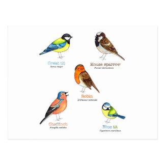 Colourful garden birds postcard