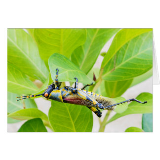 Colourful grasshopper greeting card