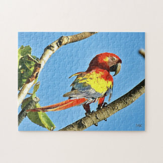 Colourful Macaw Photo Puzzle