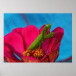 Colourful Mantis