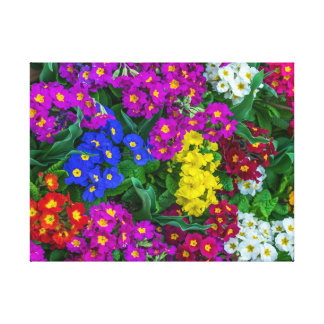 Colourful primroses canvas print