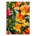 Colourful Snapdragons
