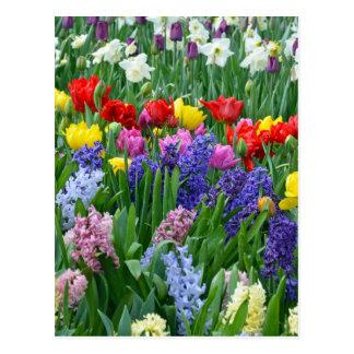 Colourful spring flower garden postcard