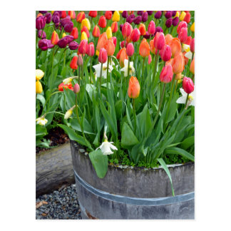 Colourful spring tulips planter print postcard