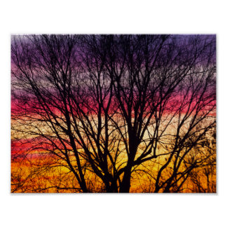Colourful Sunset with a silhouetted tree, Ohio Poster
