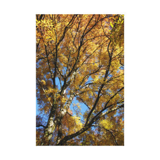 Colourful trees in autumn canvas print