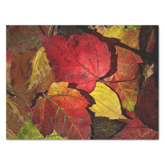 Colours of Fall Tissue Paper