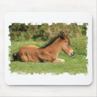 Colt Resting in Grass Mouse Pad