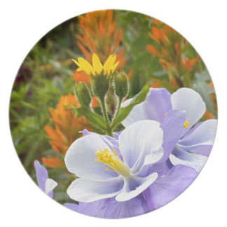 Columbine and Friends Plate
