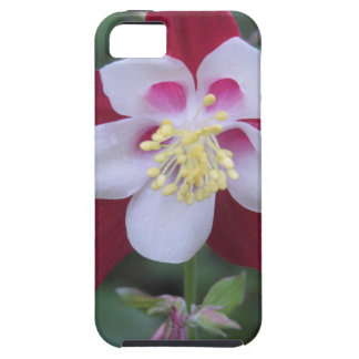 Columbine iPhone 5 Cases
