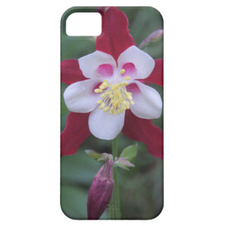 Columbine iPhone 5 Cover