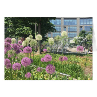 Columbus Circle Allium Flowers Fountain NYC Photo Card