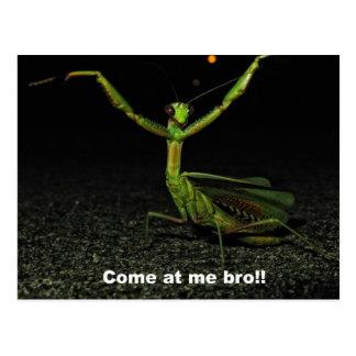 Come at me bro Mantis Postcard