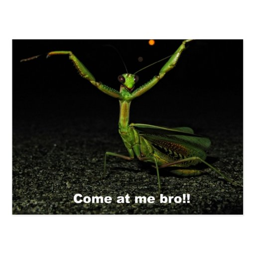 Come at me bro Mantis Post Cards
