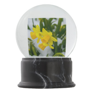 Come on Spring Time Snow Globes