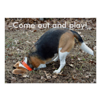 Come Out And Play Beagle Digging Poster