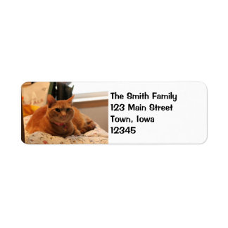 Comfy cat return address label