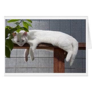 Comic Kitten blank card series