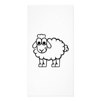 Comic sheep photo cards